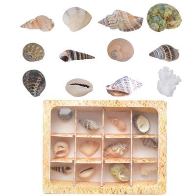 Shell collection in giftbox. R