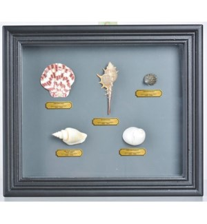 """Shell in frame. Real shells,"""