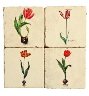 Botanical Tulip Series Set/4, Marble Coasters 4x4 in.