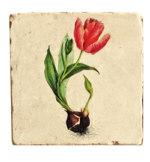 Botanical Yellow Tulip Set/4