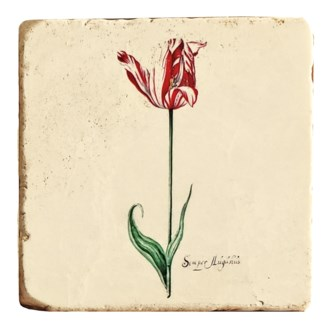 Botanical Blossoming Red Tulip Set/4, Marble Coasters 4x4 in