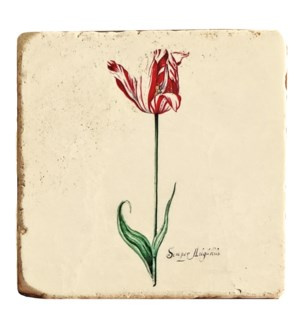 """Botanical Blossoming Red Tulip Set/4, Marble Coasters 4x4 in"""