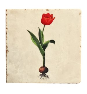 Striped Tulip Marbel Coaster