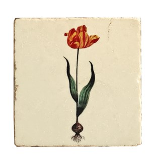 """Botanical Single Stem Red Tulip Set/4, Marble Coasters 4x4 in"""