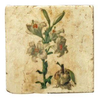 Mixed Botanical Lily Sprout Set/4, Marble Coasters 4x4 in