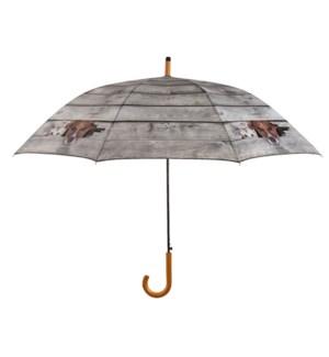 Umbrella Peek-a-boo! Dog & cat