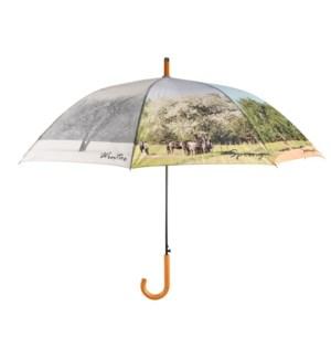 Umbrella 4 seasons