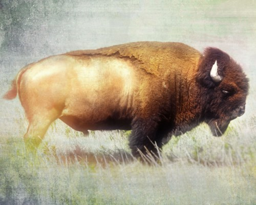 Shoshone GALLERY WRAP