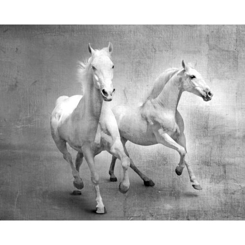 Equine Duo GALLERY WRAP