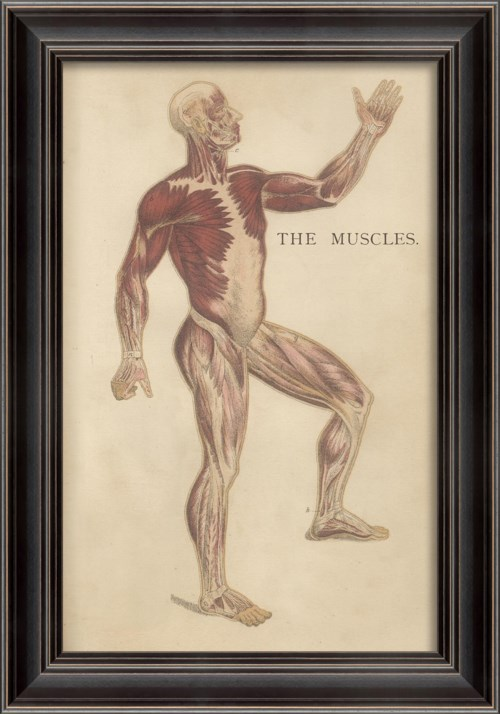 LS Physiology Muscles