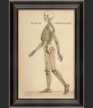 LH Human Physiology Skeleton