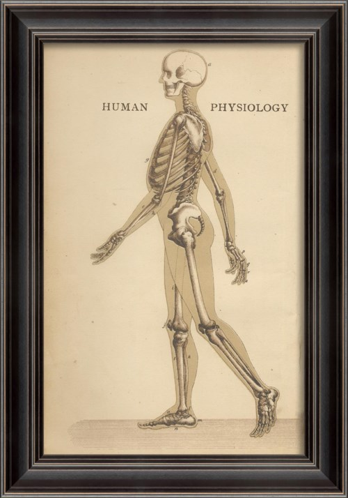 LS Human Physiology Skeleton