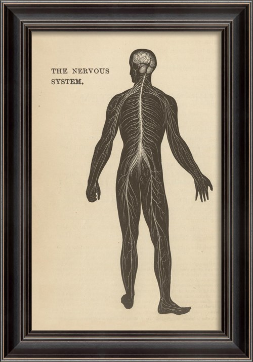 LS Physiology The Nervous System