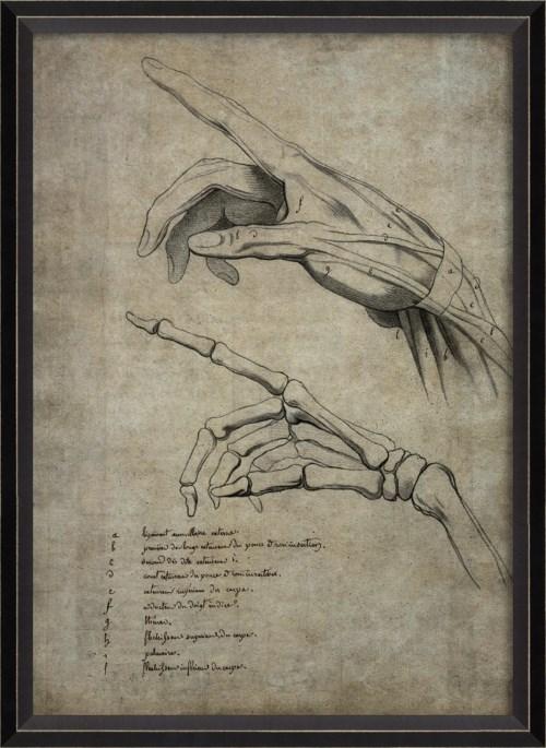 BC Hand 1