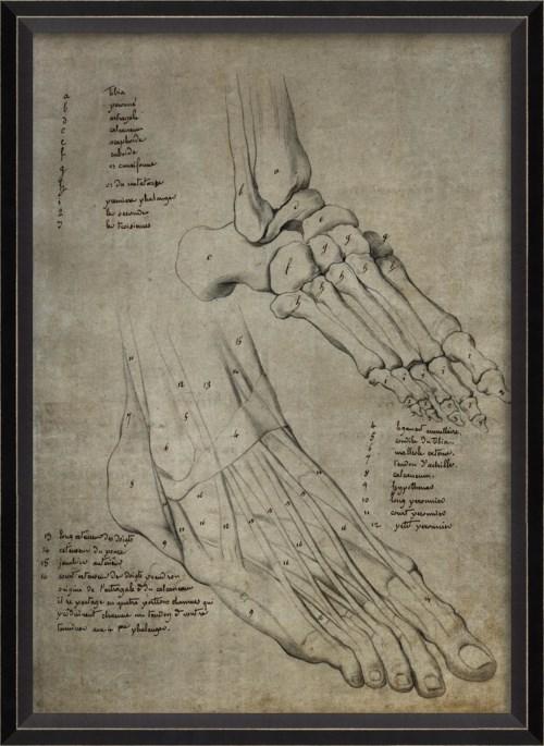 BC Foot 11