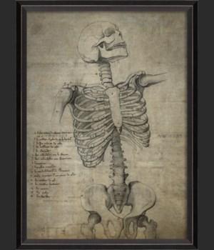 BC Skeleton 29