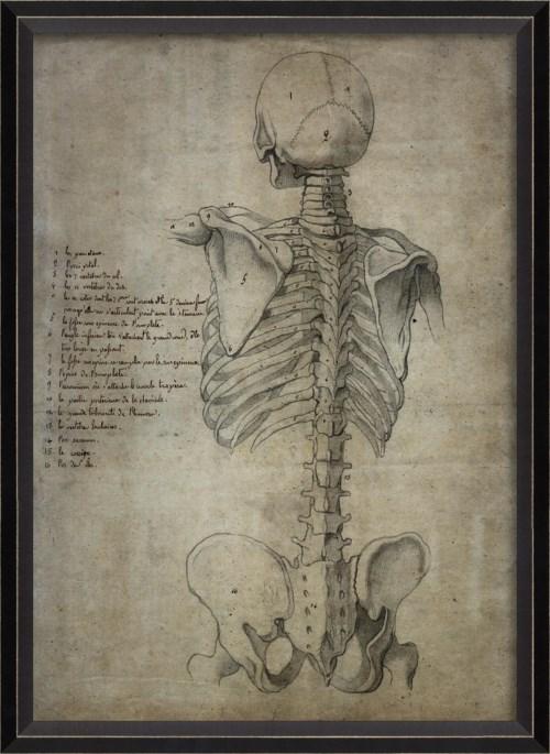 BC Skeleton 30