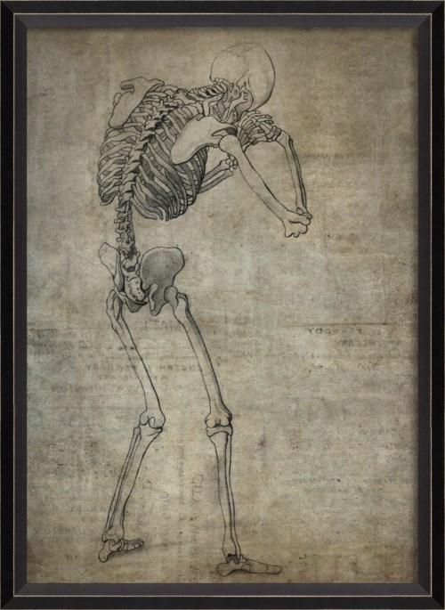 BC Skeleton 31