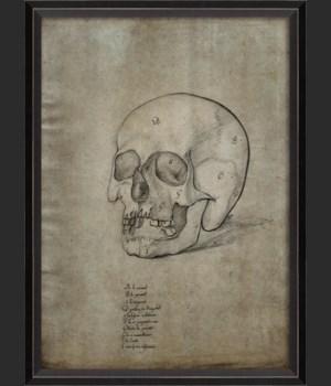 BC Skull 32