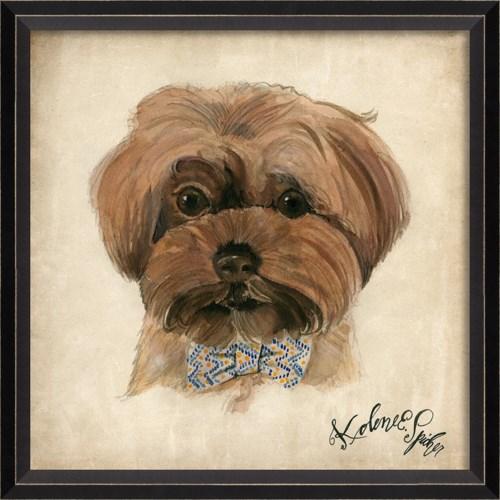 BC Dog Portrait Bailey