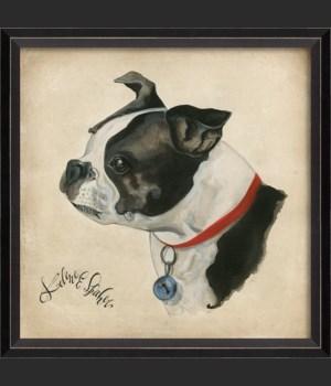 BC Dog Portrait Buster