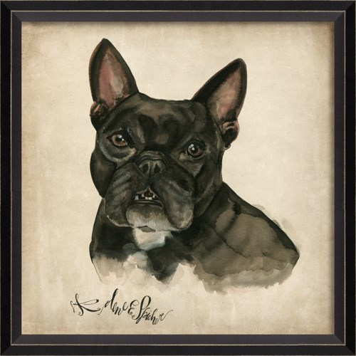 BC Dog Portrait Cooper