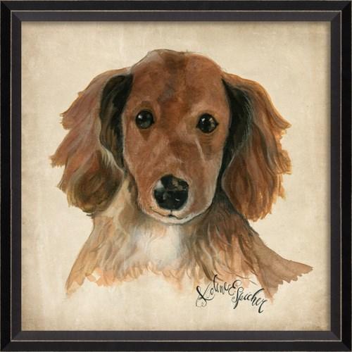 BC Dog Portrait Ginger