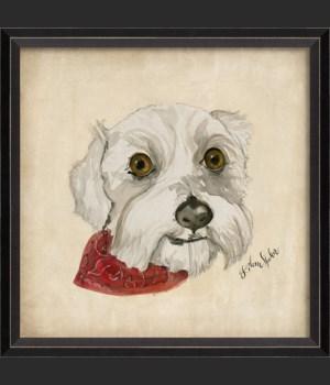 BC Dog Portrait Isabell
