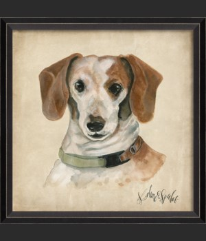 BC Dog Portrait Sadie