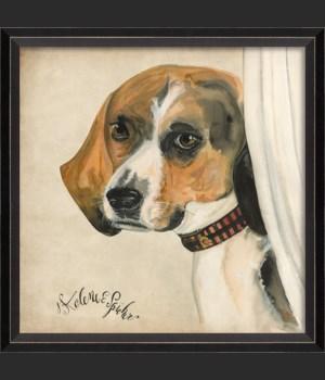 BC Dog Portrait Scout