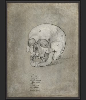 BC Anatomy Sketch Skull xl