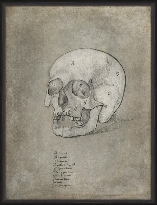 BC Anatomy Sketch Skull xl