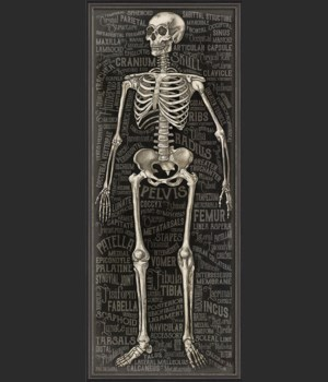 BXNS The Skeletal System 3D
