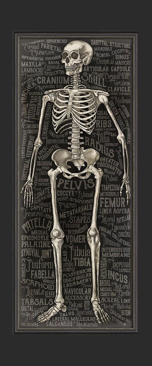 BXNS The Skeletal System 3D