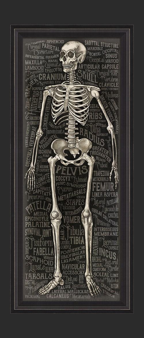 BCBL The Skeletal System