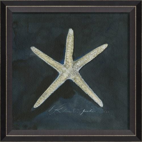 BC Seashell No1