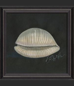 BC Seashell No2