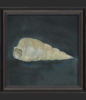 BC Seashell No3