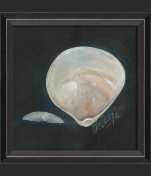 BC Seashell No5
