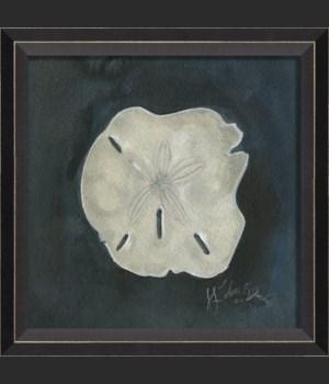 BC Seashell No7