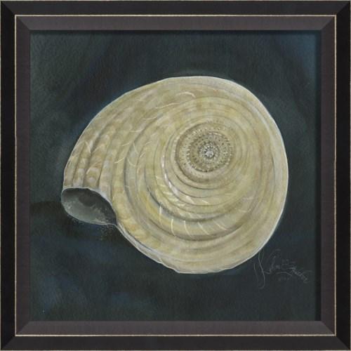 BC Seashell No8