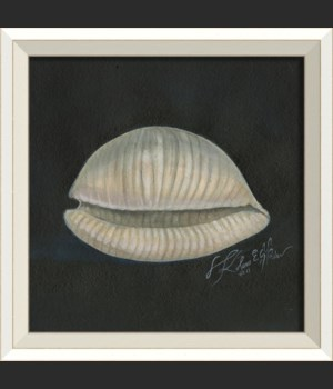 WC Seashell No2