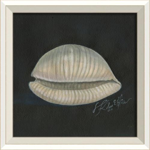 WC Seashell No2