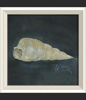 WC Seashell No3