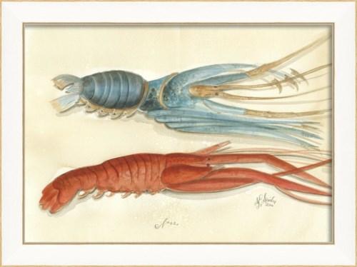SS Lobster02