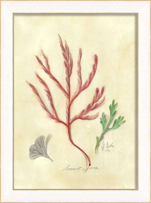 SS Seaweed02