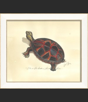 SS Southern Painted Turtle