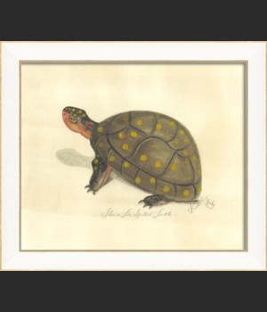 SS Spotted Turtle