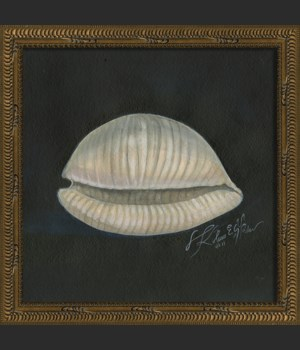 NT Seashell No2