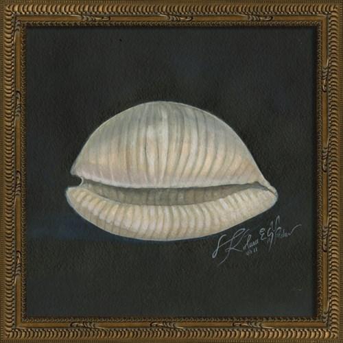 KG Seashell No2